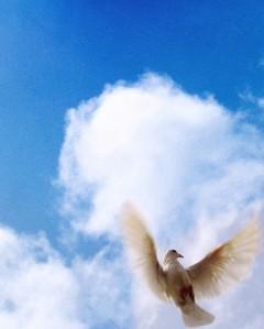 Pigeon_Flight